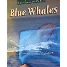 Blue Whales, by Pat Miller-Schroeder
