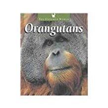 Orangutans, by Pat Miller-Schroeder